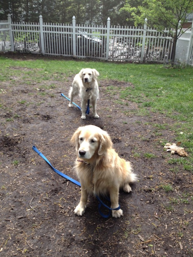 Dogscaping How To Rescue Your Lawn From Your Enthusiastic