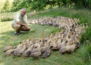 Caledonia man one of only four U.S. foie gras producers