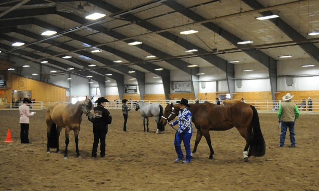 Family Ties At The Horse Show Local Winonadailynews Com