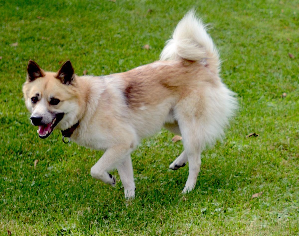 090919-bara-news-dog-park1