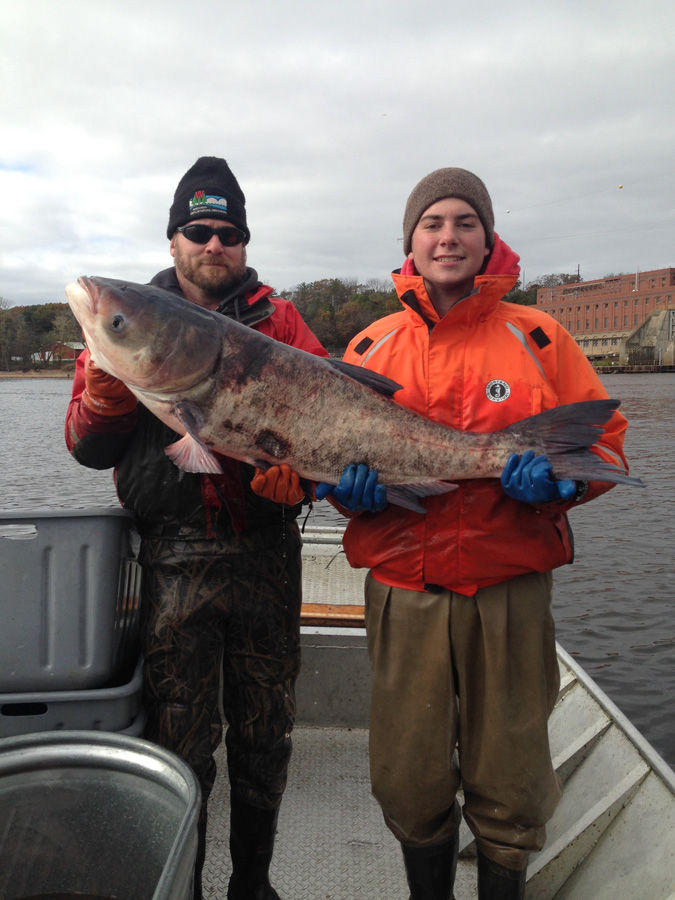 Asian carp from Lower Wisconsin River