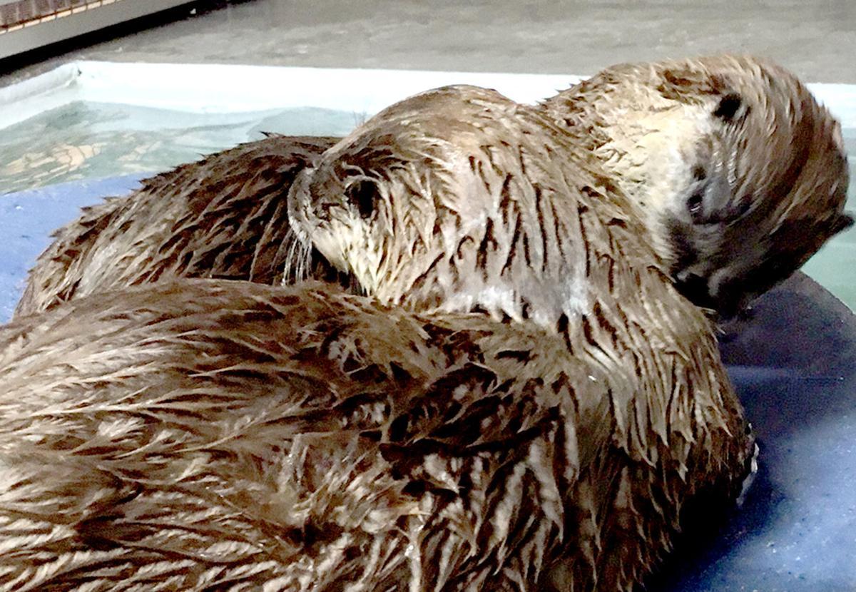 Ochsner Park Zoo river otters