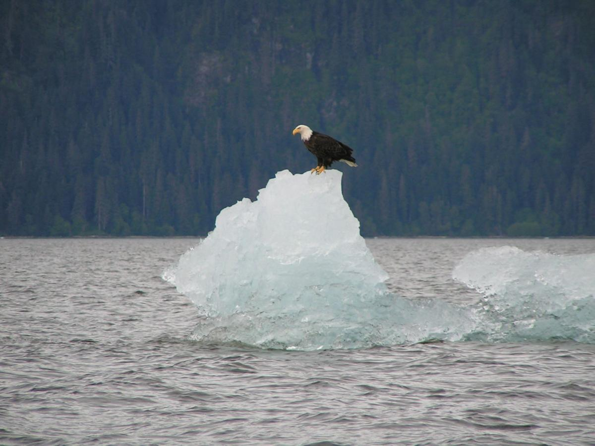 Floating Majesty(Fredrick Sound)