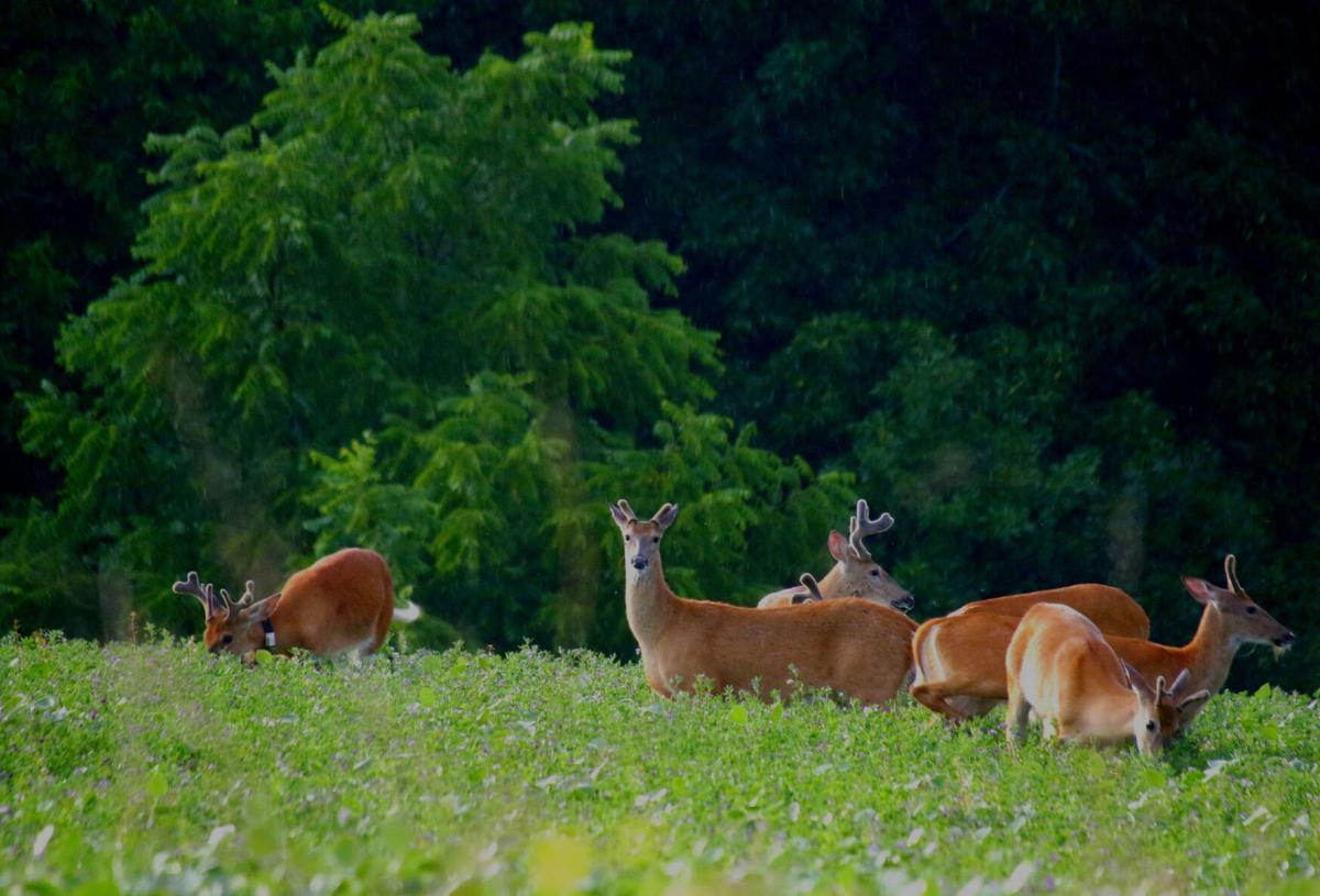Bucks bachelor group