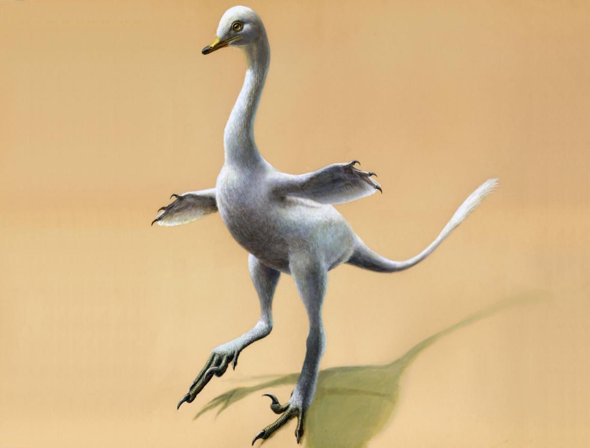 Duck Dinosaur