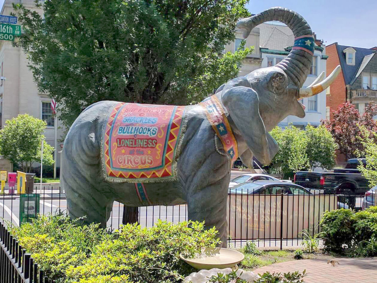 ... For The Ethical Treatment Of Animals Has Offered To Send An Elephant  Statue To Baraboo Free Of Charge To Bolster The Cityu0027s Myron Park Sculpture  Garden.