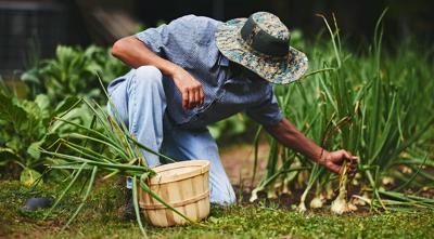 Issue No. 10: At-home agriculture in southern Alabama