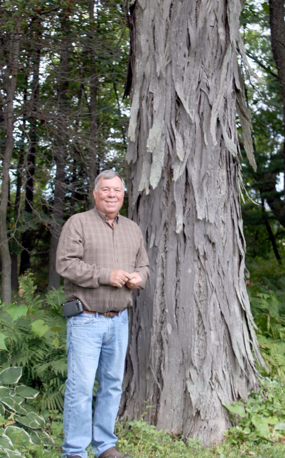 Humongous hickory