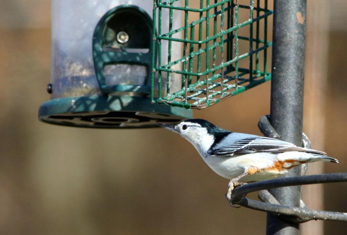 Empty feeders