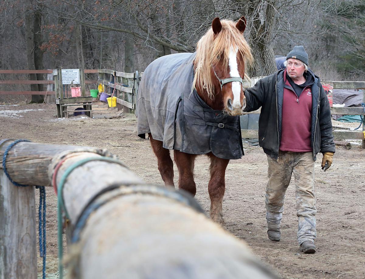 Horse Deaths