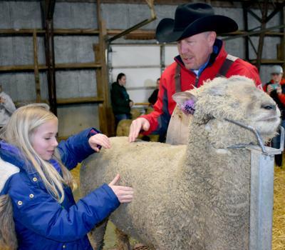 Sheep Mary