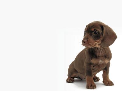 puppy2_CMYK.jpg