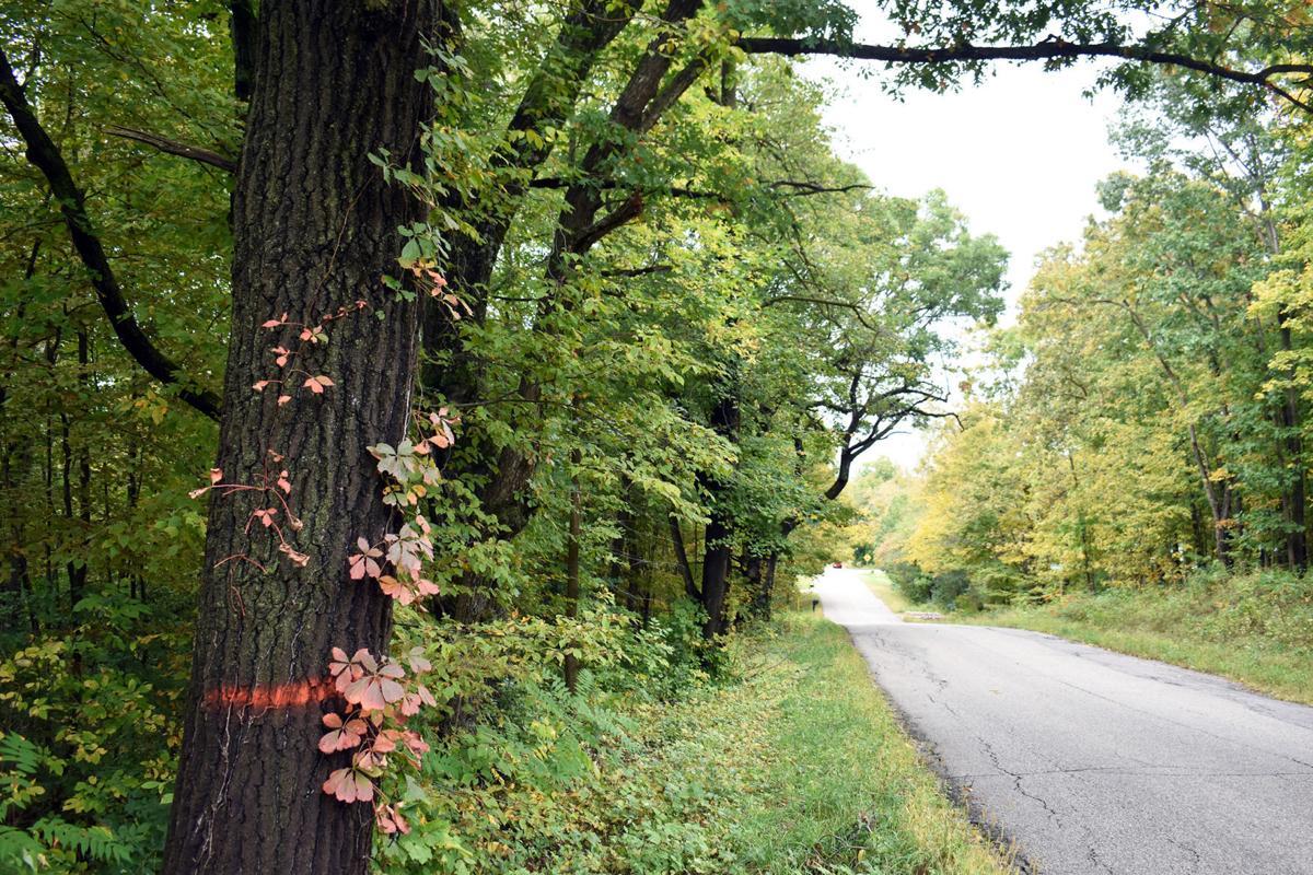 Devil's Lake tree removal