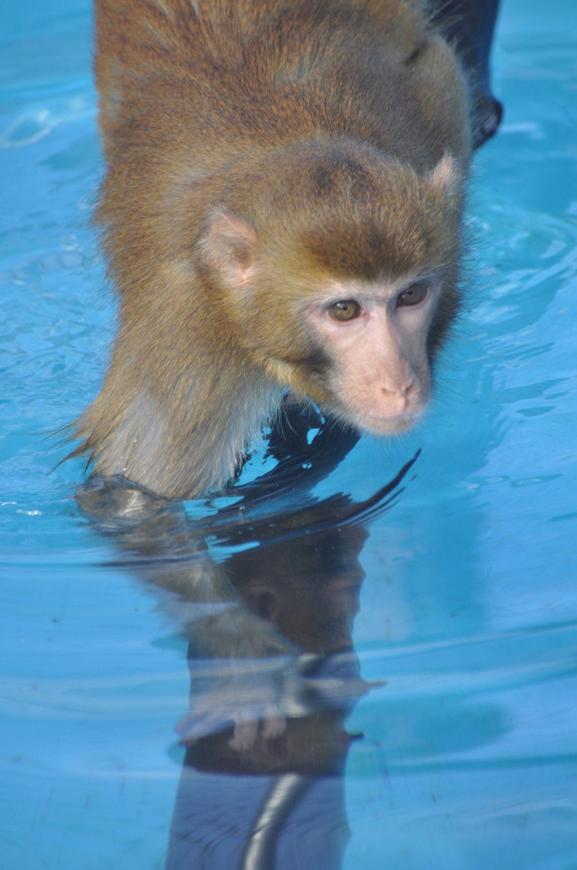 George the monkey (copy)