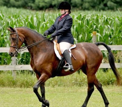 010719-bara-news-horse-award