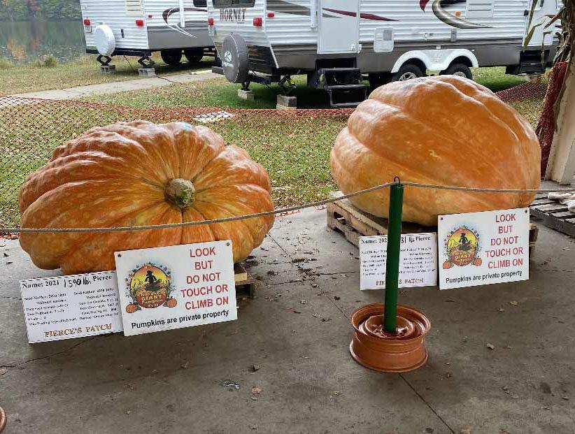 Jim Pierce giant pumpkins side by side