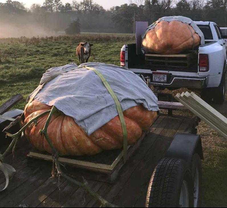 Jim Pierce giant pumpkins on wagon