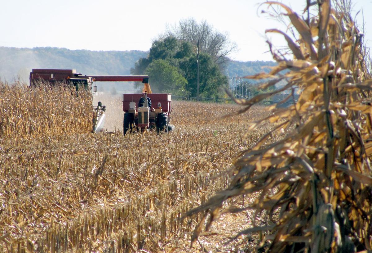 Corn harvest near Prairie du Sac (copy) (copy)