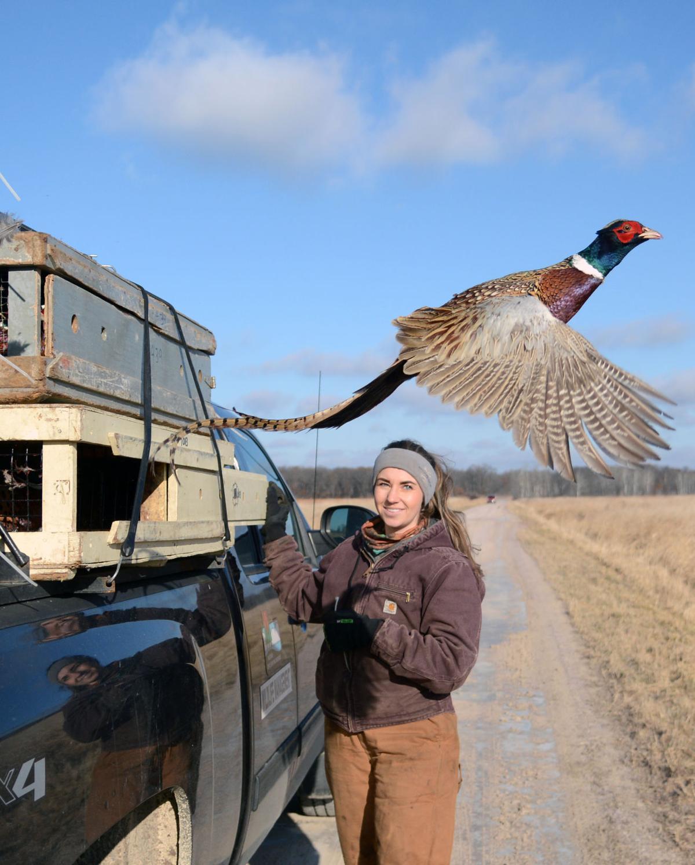 Pine Island pheasant release (copy)