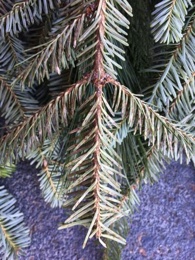 Wreath pests (copy)