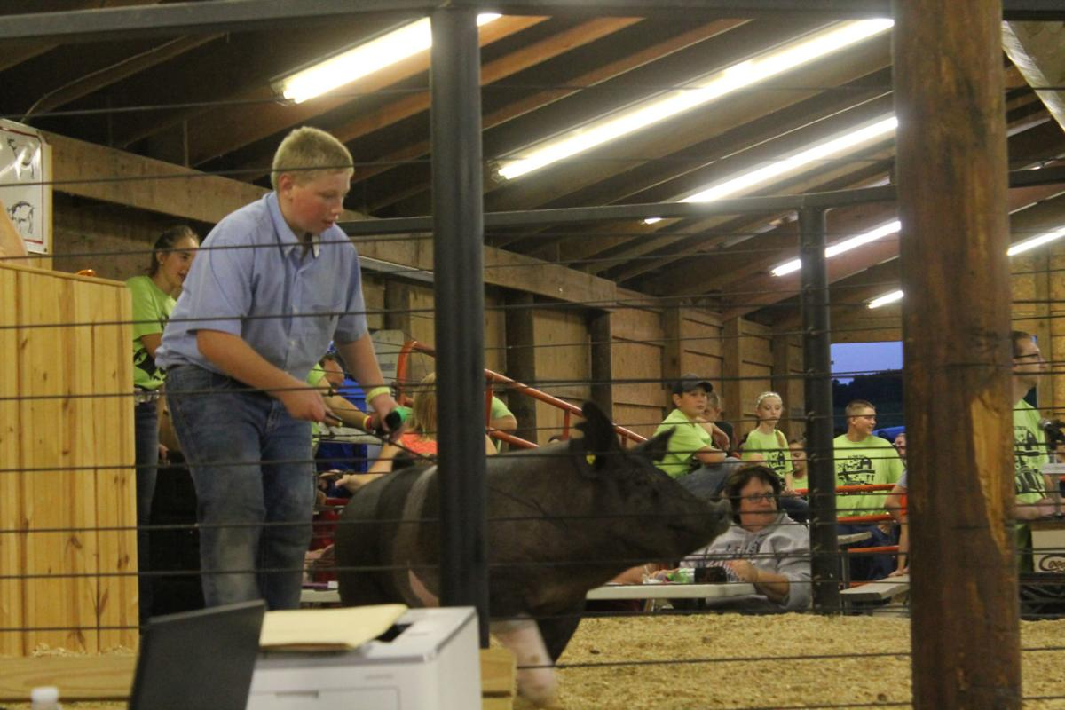 Hog is auctioned off