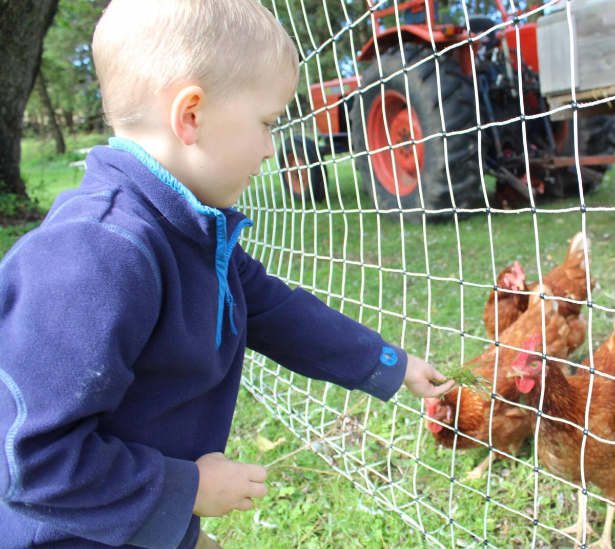 Cash feeds chickens (copy)
