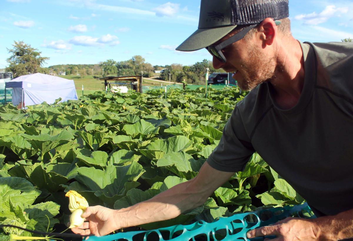 Jim explains pumpkin growing process