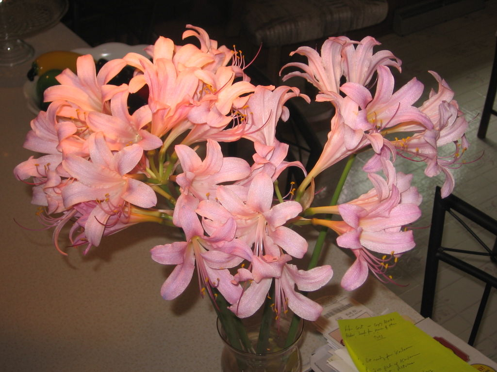 Naked Ladies A Fall Surprise Regional News Wiscnews