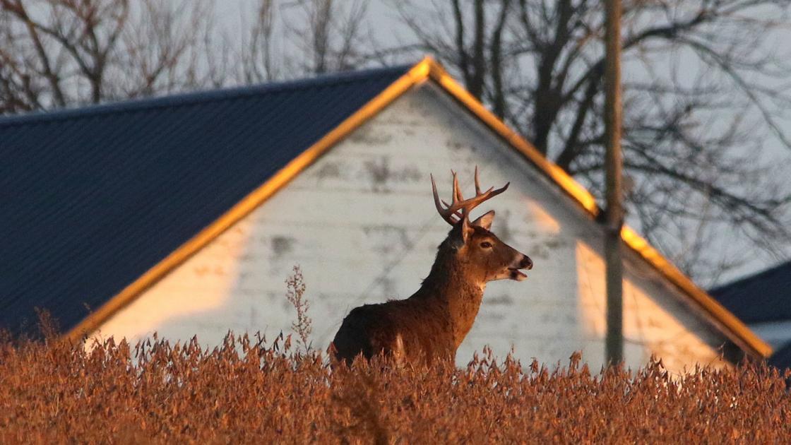 DAVIS COLUMN: Mixed conditions greet gun deer enthusiasts Saturday