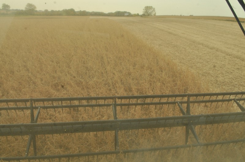 Beans 30-foot swath