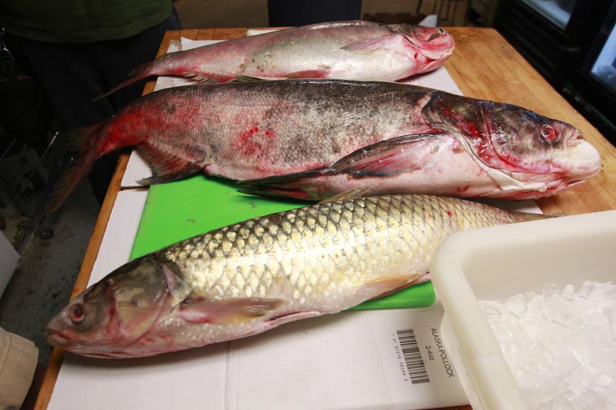 Asian carp species