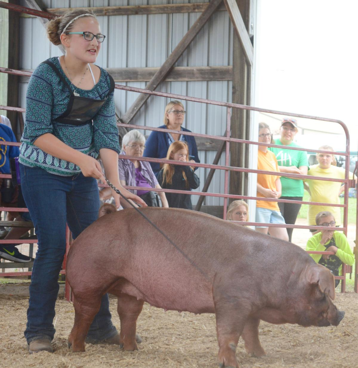 Youth work hard to bring animals to livestock shows