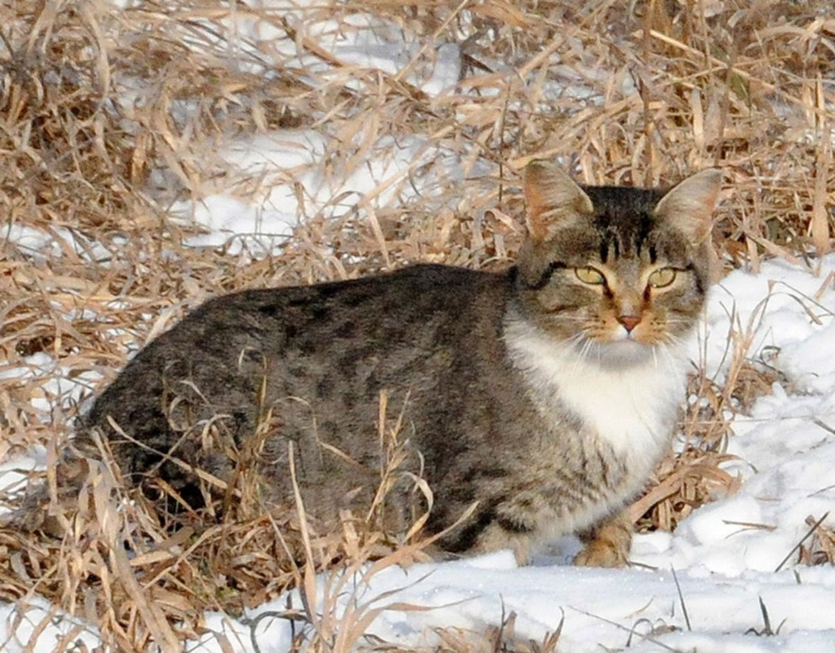 Feral cats (copy)