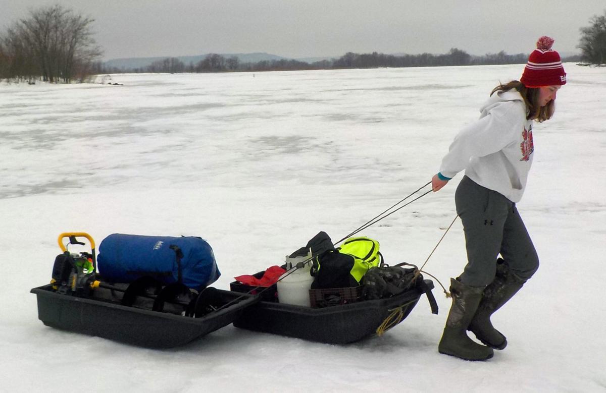 Selina pulling sleds