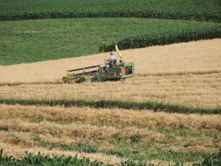Percentage of U.S. corn crop in 'good' or 'excellent' condition rises: USDA