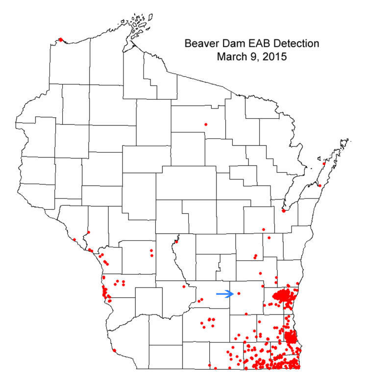 EAB dodge county