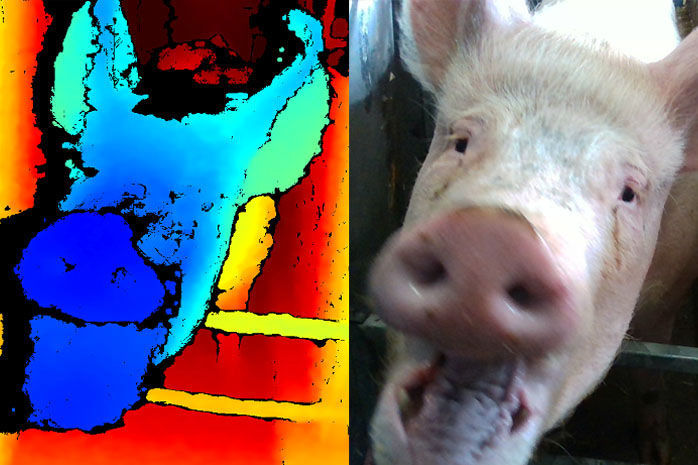 Facial-recognition technology showing pig expression (copy)