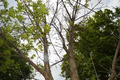 TREE TOP (copy)