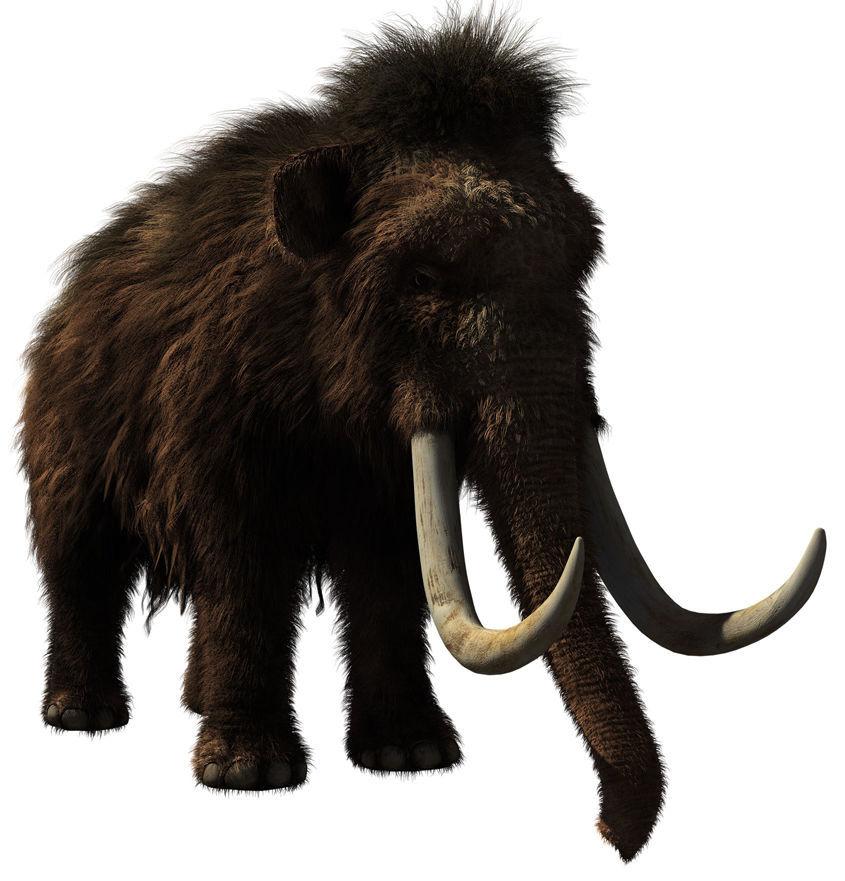 Woolly mammoths once roamed Baraboo