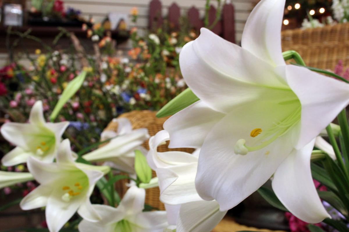 Caring for easter lilies tulips and daffodils home and garden easter lilies copy izmirmasajfo