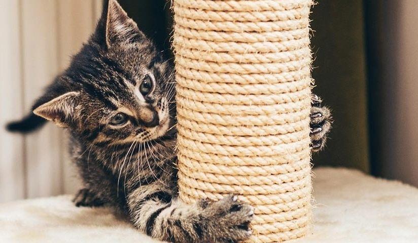 scratch kitty