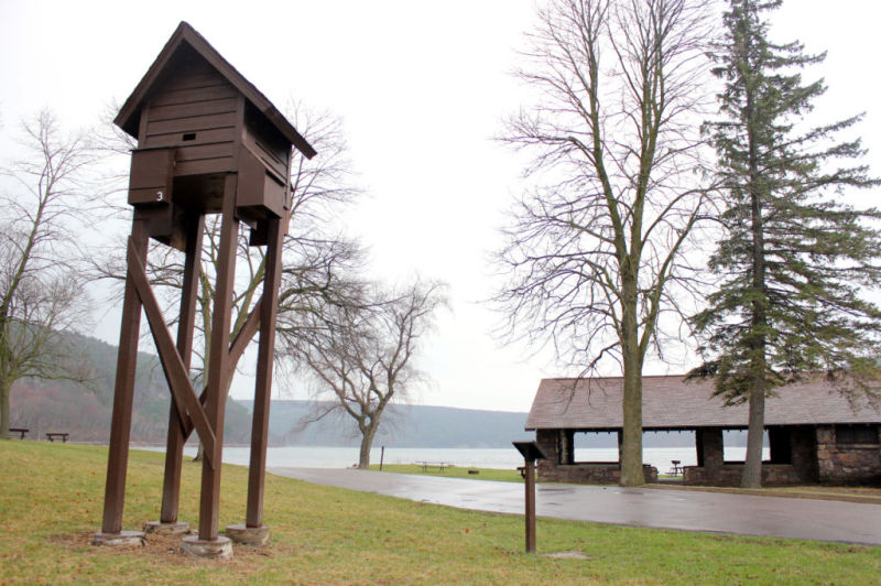 Chateau bat relocation effort comes at critical time as for Bat condo