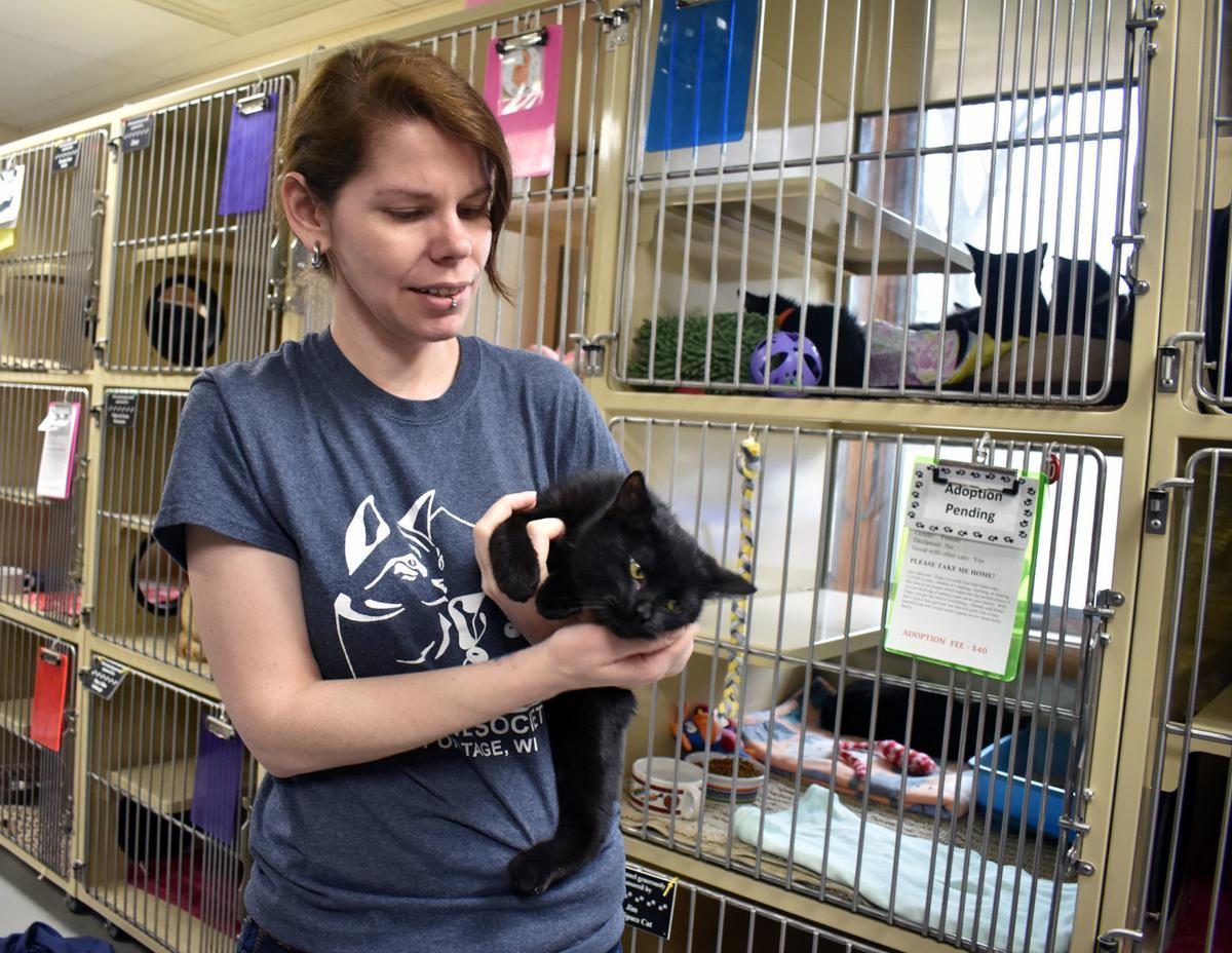 Portage Humane Society - black cat