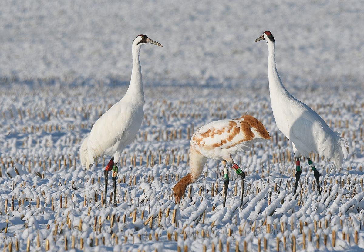 112119-bara-news-cranes-02