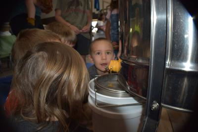A honey of a day at White Mountain Nature Center