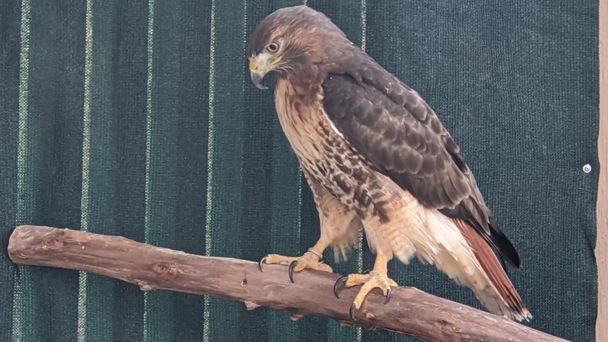WMNC announces partnership with Land On Sky Wildlife Experiences