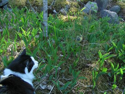 Cat hunts fledgling bird