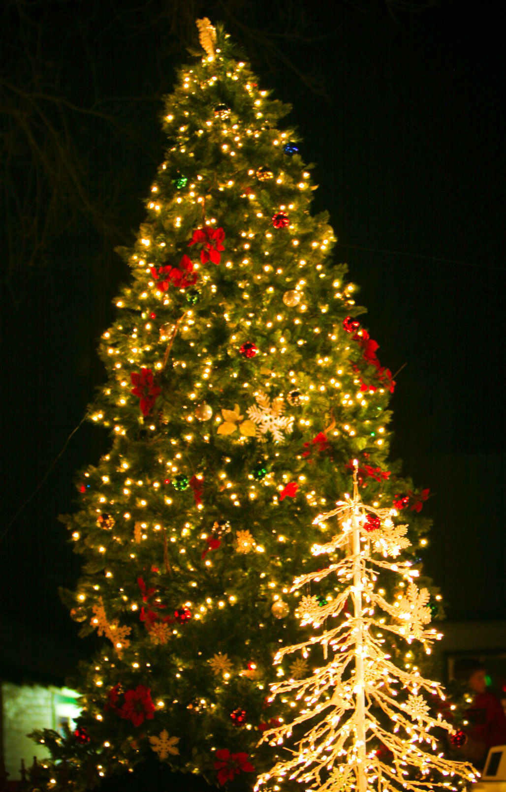 The Twelve Trees Of Christmas 2017