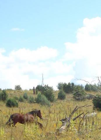 Another picture of one of the wild horse herds outside of Heber