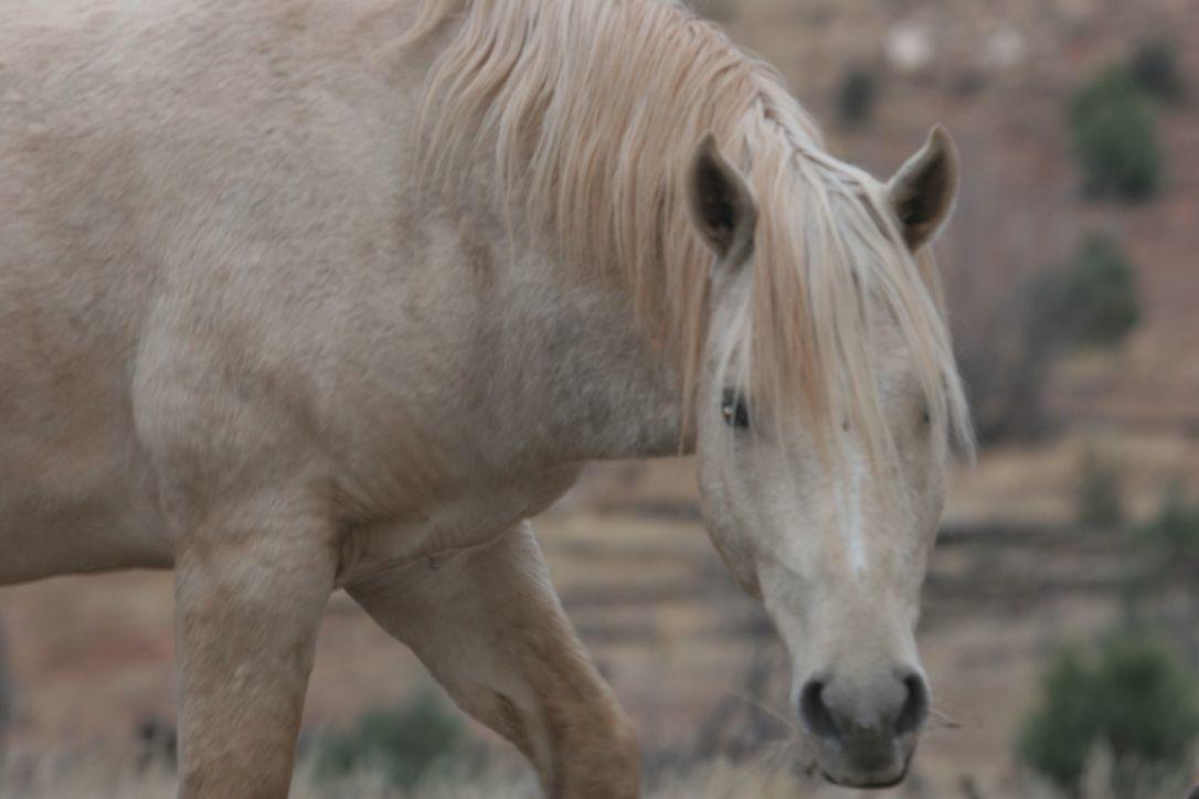 Congressman O'Halleran meets with horse advocates
